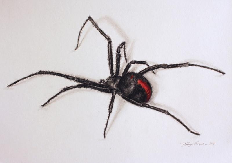 PORTFOLIO-Black-Widow-