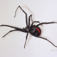 PORTFOLIO-Black-Widow-