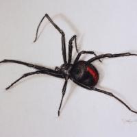 PORTFOLIO-Incy-Wincy-Spider
