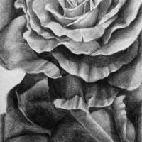 PORTFOLIO-roses-